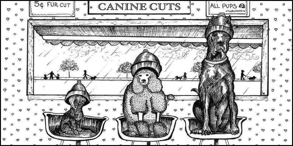 Illustration Canine Cuts